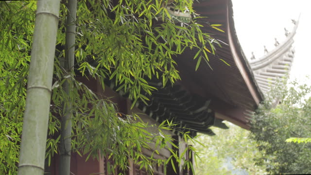 vídeos de stock, filmes e b-roll de parte do templo em hangzhou, china - folha de bambu