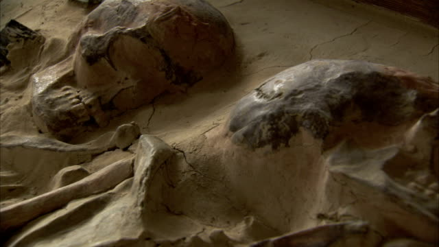 Partially unearthed human remains are on display in a museum. Available in HD