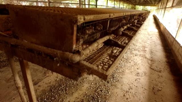 Rebhuhn Vogel Bauernhof Tiere