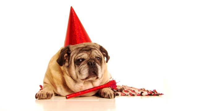 パーティの犬 - party hat点の映像素材/bロール