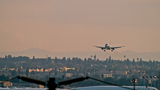 stockvideo's en b-roll-footage met ls passenger aircraft landing at lax airport with silhouette of telephone poles in foreground and birds crossing frame - lax airport