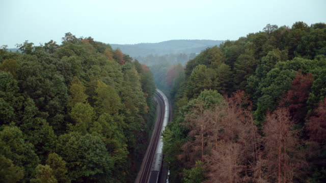 a passenger train travels through a dense forest. - 2003 stock videos & royalty-free footage