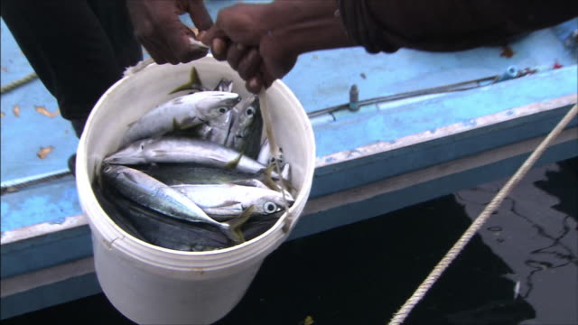 Passing a bucket of fish from shipboard A man receives the bucket to carry it to fish market