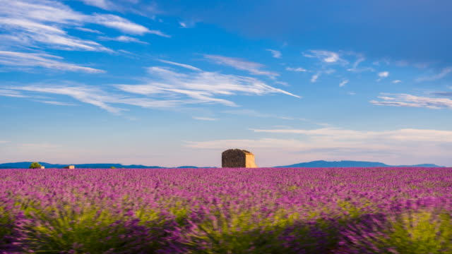 passing by lavender fields while driving on a lonely road - provence alpes cote d'azur stock videos & royalty-free footage