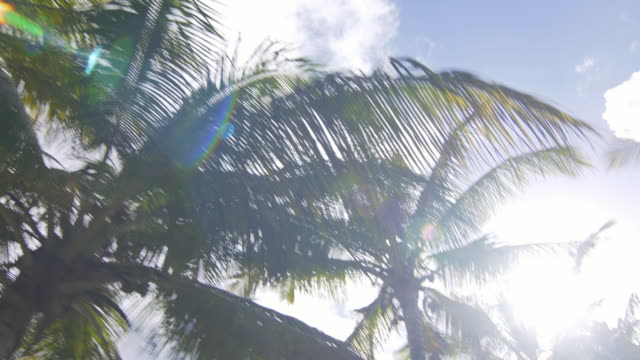 Passing by palm trees