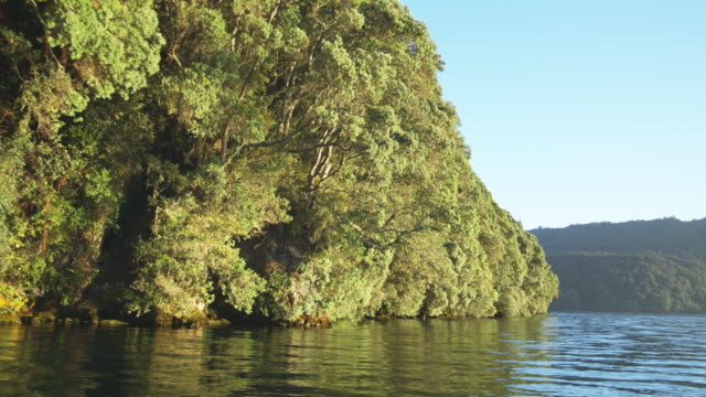 ws boat pov passing by trees hanging over lake's edge/ rotorua, new zealand - rotorua stock videos and b-roll footage