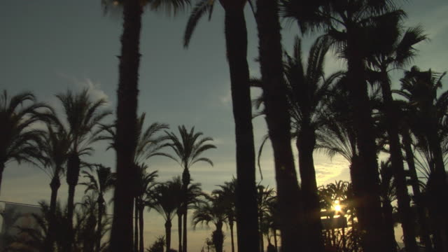 pov, passing silhouettes of  palm trees along promenade de la croisette at sunset, cannes, france - fan palm tree stock videos & royalty-free footage