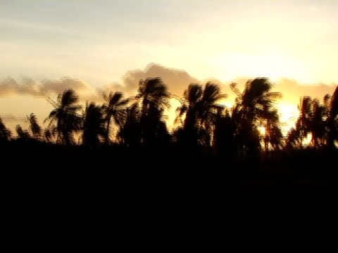 stockvideo's en b-roll-footage met side pov, passing silhouettes palm trees at sunset, brazil - waaierpalm