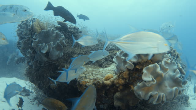 passing through a coral reef - scuba diving stock videos & royalty-free footage