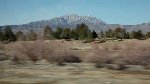 WS POV Passing trees with mountains in  background / San Bernardino County,California,USA