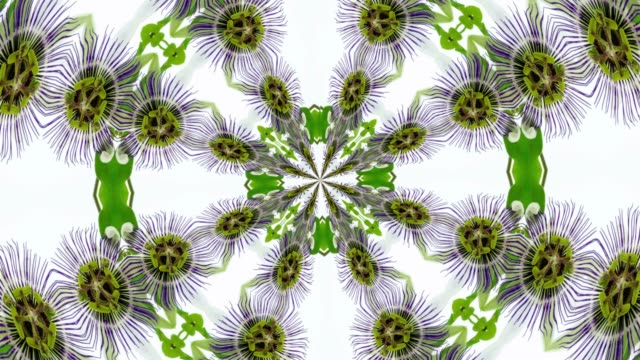 Passion Flower Floral Background