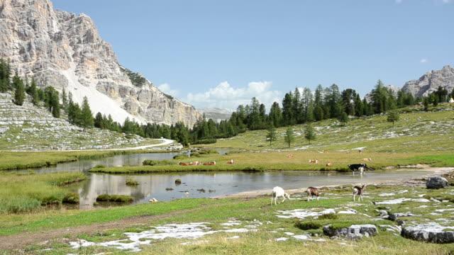Scena rurale con animali Dolomiti