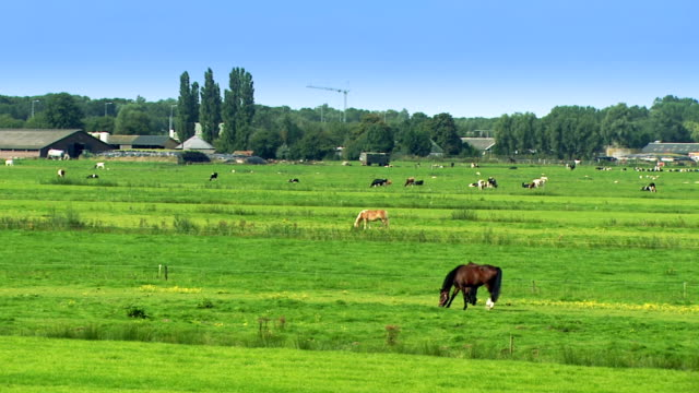 pasture - ranch home stock videos & royalty-free footage