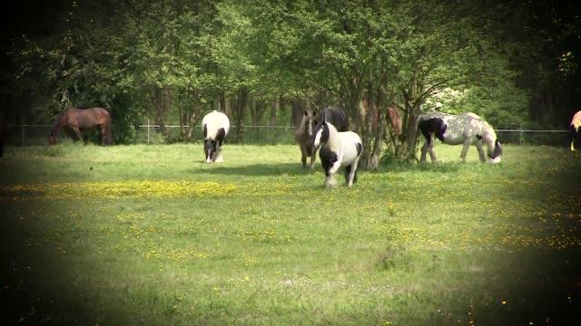 pasturing horses - 動物の色点の映像素材/bロール