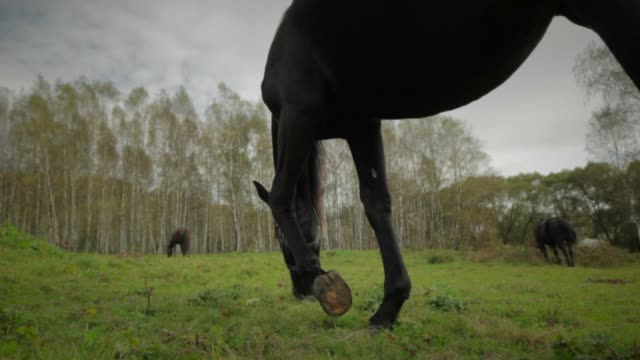 pasturing horses - pasture stock-videos und b-roll-filmmaterial