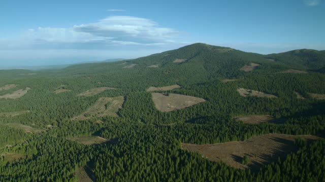 Patches of clearcut forest in Lassen National Forest, California.