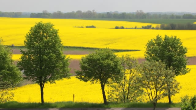 patchwork canola field landscape in germany - patchwork landscape stock videos and b-roll footage