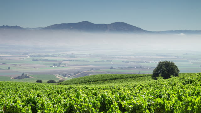 stockvideo's en b-roll-footage met lappendeken van wijngaarden in california wine country - time-lapse - valley