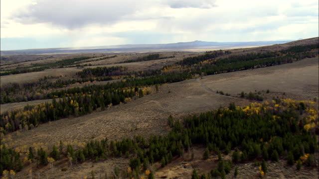 vídeos de stock e filmes b-roll de inclinada desigual floresta de paisagem-vista aérea-wyoming, condado de fremont, estados unidos - inclinado