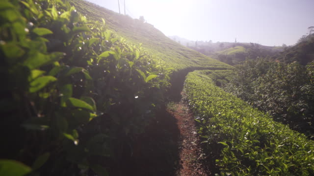 path along sri lanka tea plantation - スリランカ点の映像素材/bロール