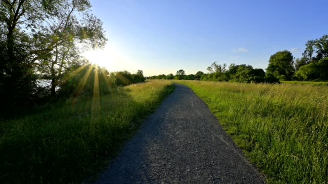 path at sunrise in spring, kinzigsee, langenselbold, hesse, germany - 田舎道点の映像素材/bロール