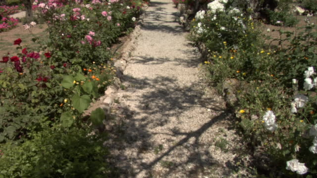 A path cuts through a flower garden