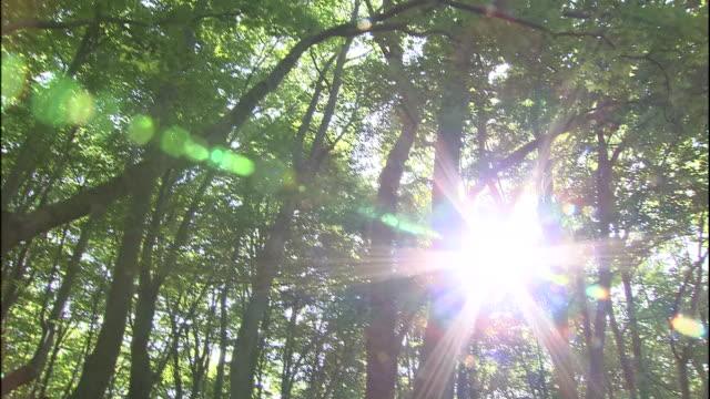 A path cuts through a forest in Mount Chokai in Japan.