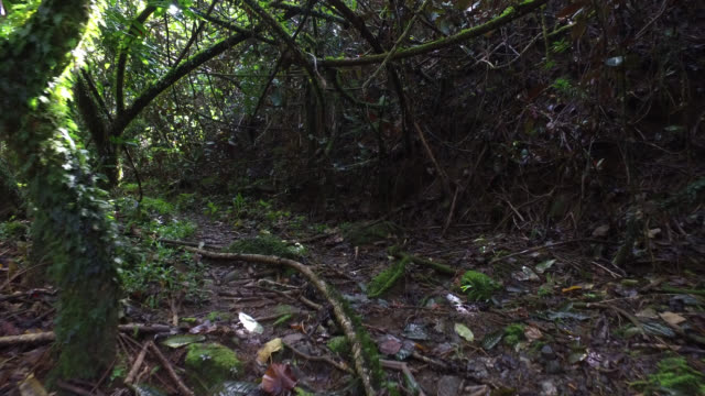 path in a tropical forest - french polynesia stock videos & royalty-free footage