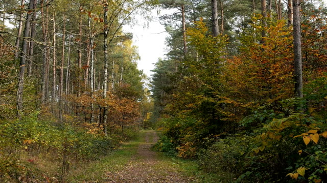 hd crane: path in an autumn forest - batting sports activity stock videos & royalty-free footage