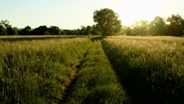 Path in meadow in the morning, Kahl am Main, Bavaria, Germany