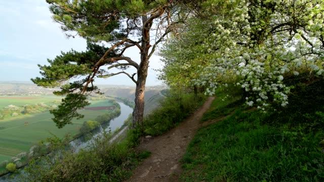 path in spring, hessigheim, felsengärten, river neckar, baden-württemberg, germany - neckar river stock videos & royalty-free footage