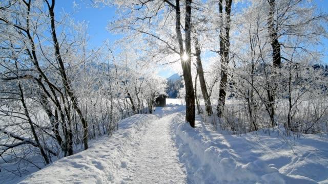 path in winter landscape near lake barmsee with sun, krün, garmisch-partenkirchen upper bavaria, bavaria, germany, european alps - krün stock videos and b-roll footage