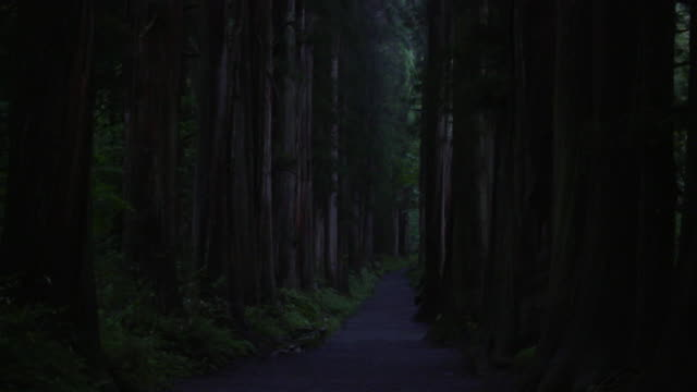 path lined with cedar trees, nagano, japan - evergreen tree stock videos & royalty-free footage