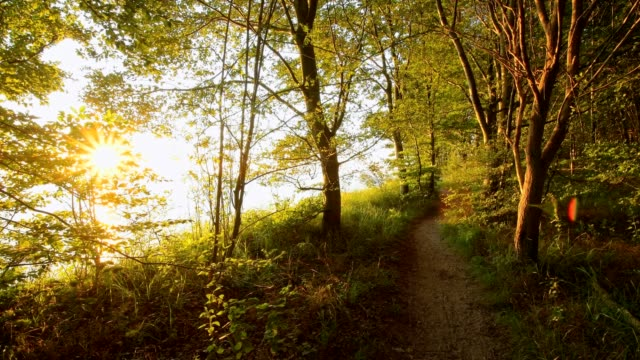 Path near steep coast at sunrise, Langenberg, Bansin, Usedom, Baltic Sea, Western Pomerania, Germany