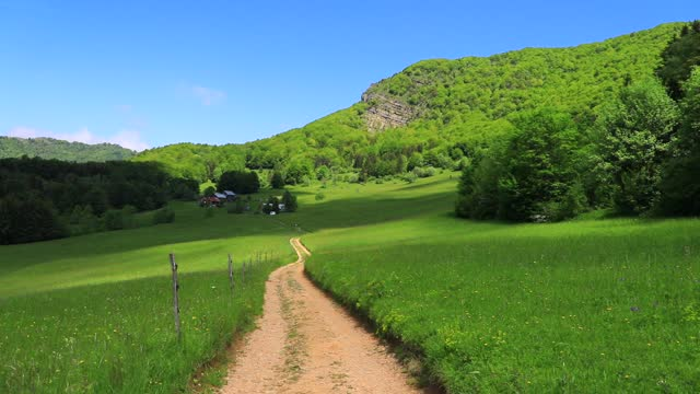 path runs through an alpine meadow in the chartreuse mountains on june 10, 2021 in entremont-le-vieux, france. chartreuse regional nature park is... - flower head stock videos & royalty-free footage