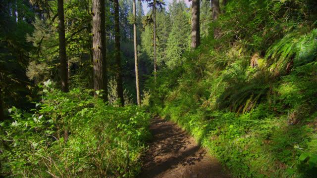 MEDIUM SHOT path through lush green forest