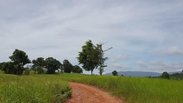 vídeos de stock, filmes e b-roll de caminho através do prado no parque nacional. - árvore tropical