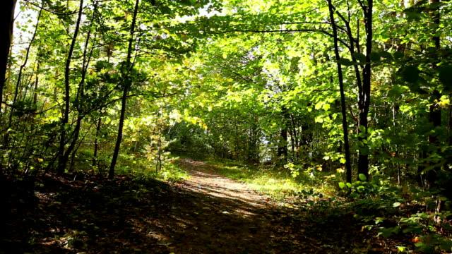 Weg durch den Wald.