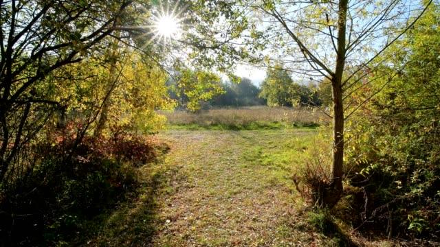 Path with sun in autumn, Mondfeld, Wertheim, Main-Tauber-Kreis, Baden-Württemberg, Germany