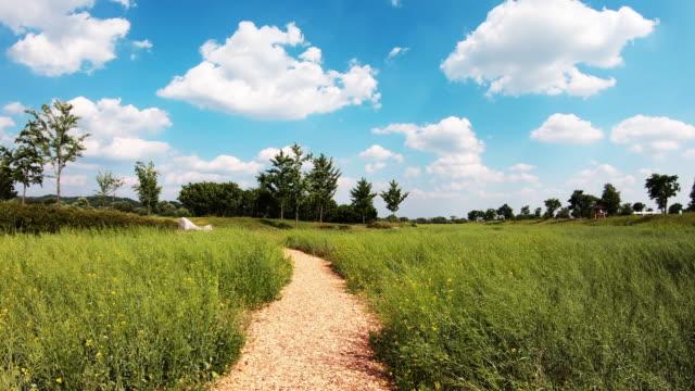 pathway through green field / dangnamriseom island, yeoju-si, gyeonggi-do, south korea - footpath video stock e b–roll