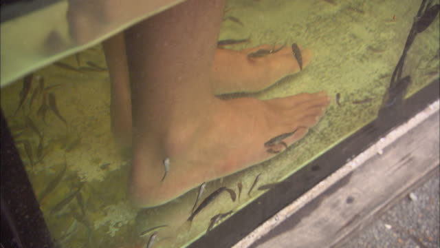 a patron's feet are lowered into a tank of doctor fish for a pedicure. - pedicure stock videos & royalty-free footage