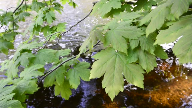 patterns of light on leaves beside a river - derbyshire stock-videos und b-roll-filmmaterial