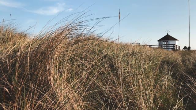 pavilon on the beach - marram grass stock videos & royalty-free footage