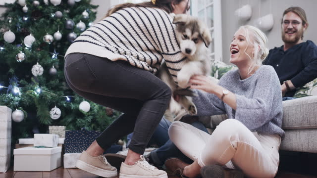 paws down, the best christmas ever - occhi chiusi video stock e b–roll