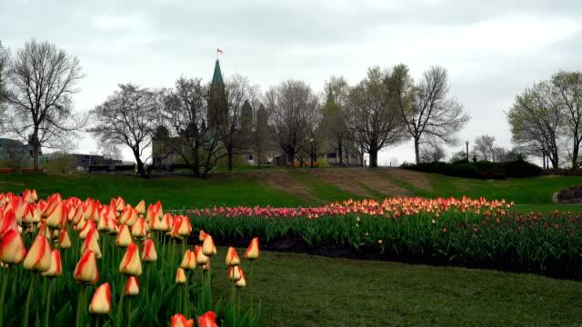 vídeos y material grabado en eventos de stock de la torre de la paz en el canadian tulip festival - colina del parlamento ottawa