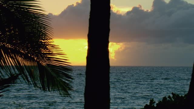 peaceful ocean sunset in hawaii - tropischer baum stock-videos und b-roll-filmmaterial
