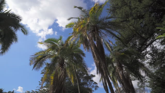 a peaceful pan of a grove of palm trees on a sunny day with a background of a blue sky with patchy clouds - cape town, south africa - panning stock videos & royalty-free footage