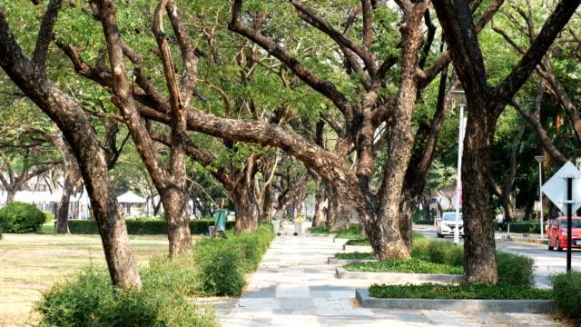 vídeos de stock e filmes b-roll de peaceful park in the city - perspetiva diminutiva
