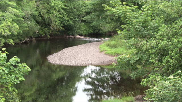 ms, peaceful river surrounded by green foliage, sneem, ireland - stationary process plate stock videos & royalty-free footage
