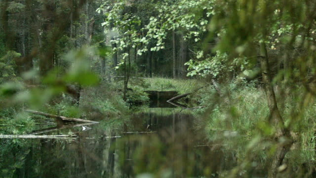Peaceful scenery. River surrounded by trees